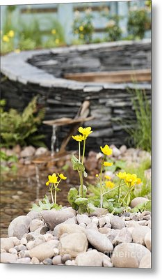 Marsh Marigolds Metal Print by Anne Gilbert