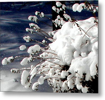 Marshmallow Sprouts Metal Print by Pamela Hyde Wilson