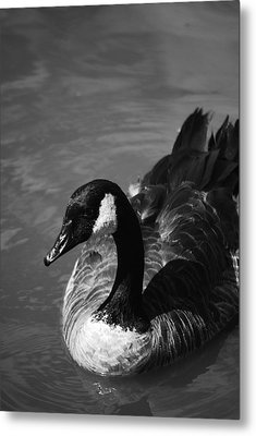 #mary Metal Print by Becky Furgason