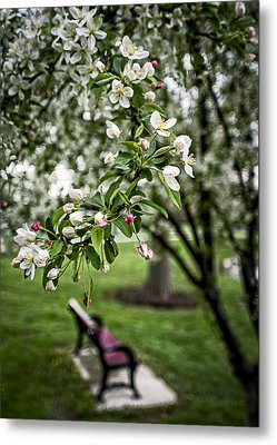 Mary's Tree And Bench Metal Print by Wayne Meyer