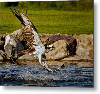 Master Fisherman Metal Print by Jack Bell