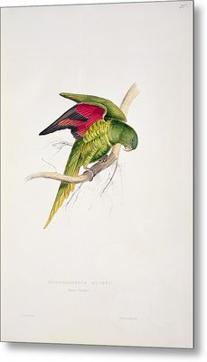 Matons Parakeet Metal Print by Edward Lear