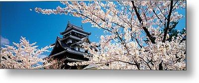 Matsue Castle Cherry Blossoms Shimane Metal Print