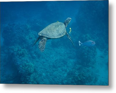 Metal Print featuring the photograph Maui Sea Turtle And Unicorn Fish by Don McGillis
