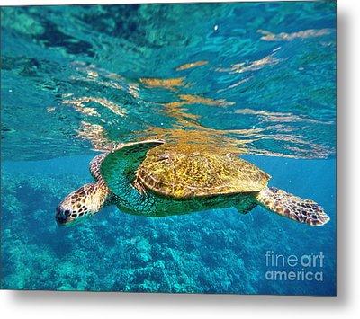 Maui Sea Turtle Metal Print by Birgit Tyrrell