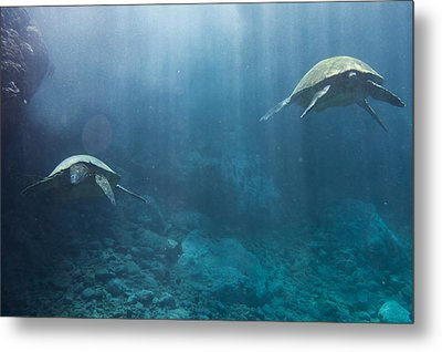 Metal Print featuring the photograph Maui Sea Turtles Farewell by Don McGillis