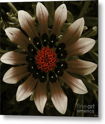 Metal Print featuring the photograph May May  by Janice Westerberg