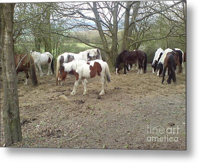 Metal Print featuring the photograph May Hill Ponies 2 by John Williams