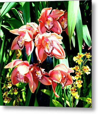 Joy Orchids Metal Print