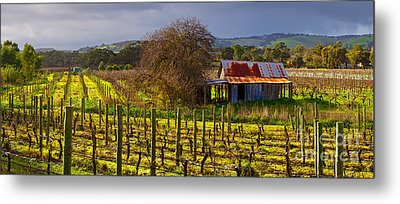 Mclaren Flat Vineyard Metal Print by Bill  Robinson