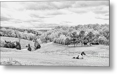 Meadow Bw Metal Print by Chuck Kuhn