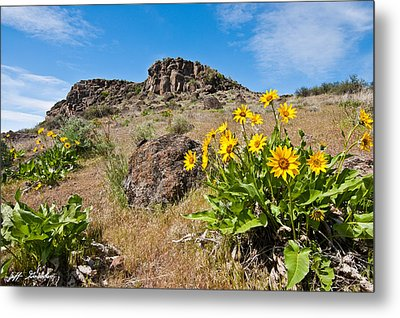 Metal Print featuring the photograph Meadow Of Arrowleaf Balsamroot by Jeff Goulden