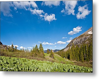 Metal Print featuring the photograph Meadow Of False Hellebore by Jeff Goulden