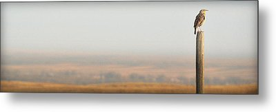 Meadowlark Mornings.. Metal Print