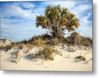Meanwhile Somewhere In Florida Metal Print by JC Findley