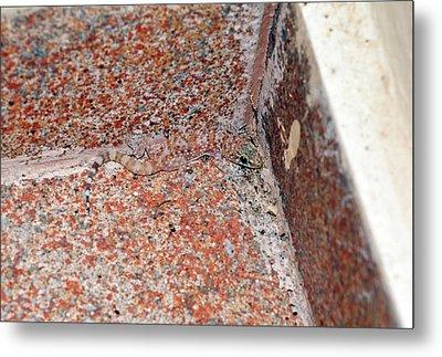 Mediterranean House Gecko On A Wall Metal Print