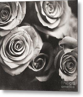 Medium Format Analog Black And White Photo Of White Rose Flowers Metal Print by Edward Olive