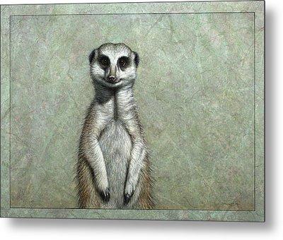 Meerkat Metal Print by James W Johnson