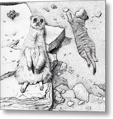 Meerkats Metal Print by Inger Hutton