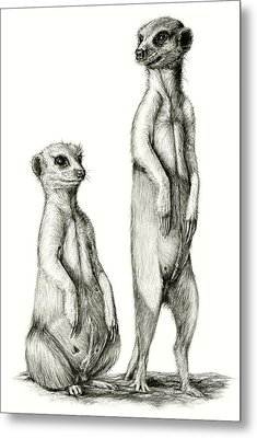 Metal Print featuring the drawing Meerkatte by Heidi Kriel