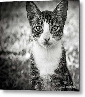 Meet George Metal Print