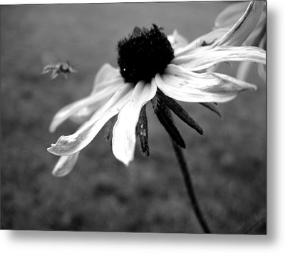 Meet In The Middle Metal Print by Gilbert Photography And Art