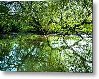 Meeting A Willow Tree In The Evening Metal Print