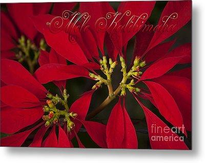 Mele Kalikimaka - Poinsettia  - Euphorbia Pulcherrima Metal Print by Sharon Mau