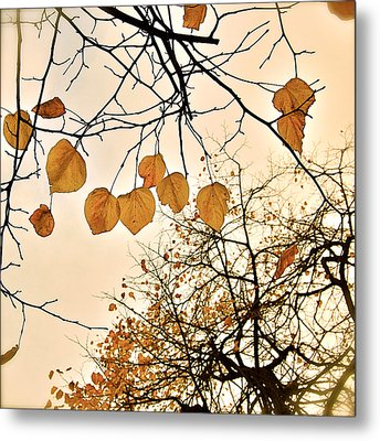 Mellow Touch Metal Print