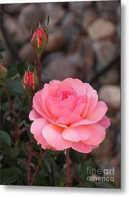 Memorial Day Rose Metal Print by Phyllis Kaltenbach