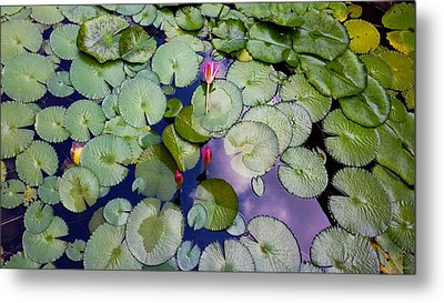 Memories Of Monet Metal Print by Barbara Chichester