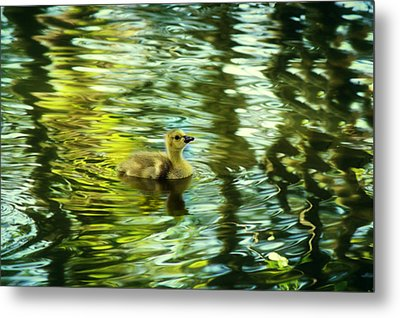 Memories Of Spring Metal Print by Melanie Lankford Photography