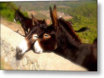 Menorcan Donkeys Metal Print