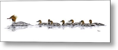 Merganser Family Metal Print by Brent Ander