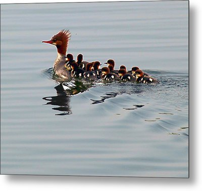 Punk Duck And Posse Metal Print by Richard Engelbrecht