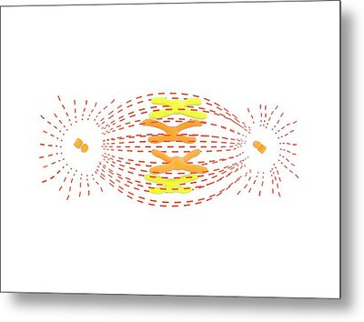 Metaphase In Cell Division Metal Print by Science Photo Library