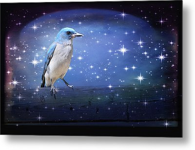 Mexican Blue Jay Metal Print