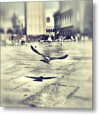 #mgmarts #bird #nature #flying #fly Metal Print by Marianna Mills