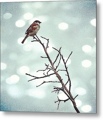 #mgmarts #bird #nature #life #bestpic Metal Print by Marianna Mills