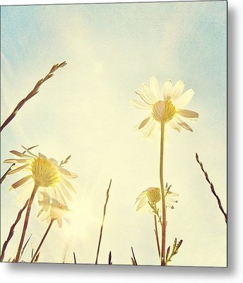 #mgmarts #daisy #all_shots #dreamy Metal Print by Marianna Mills