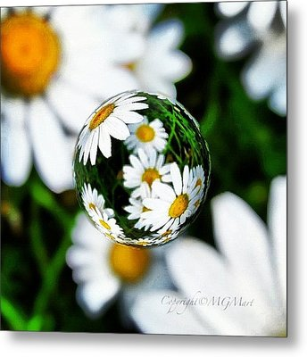 #mgmarts #daisy #flower #weed #summer Metal Print by Marianna Mills
