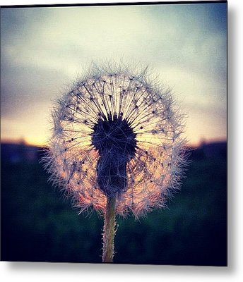#mgmarts #dandelion #sunset #simple Metal Print by Marianna Mills