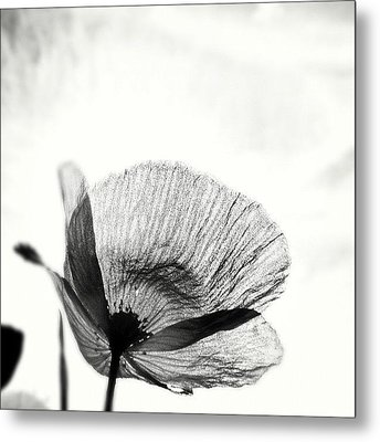 #mgmarts #poppy #summer #spring #sunny Metal Print by Marianna Mills