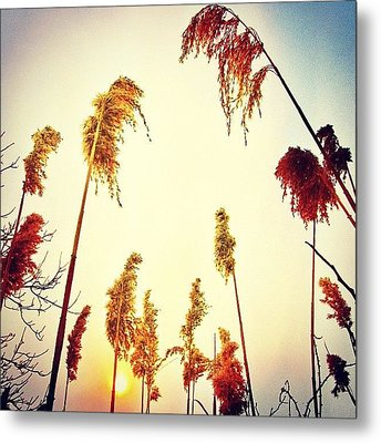 #mgmarts #sunset #bright #beautiful Metal Print by Marianna Mills