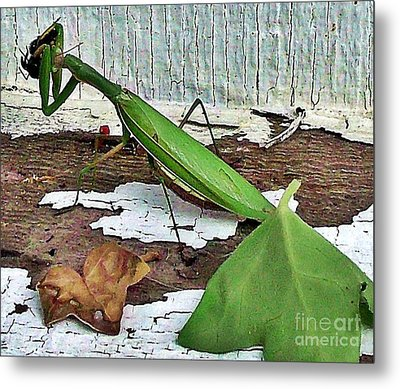 Midday Snack Metal Print