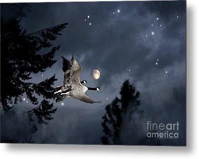 Midnight Flight Metal Print