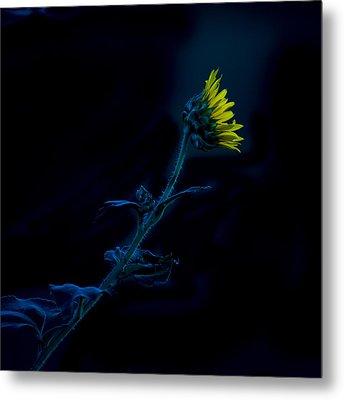 Midnight Sunflower Metal Print by Darryl Dalton