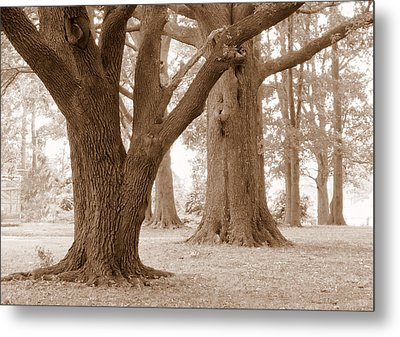 Metal Print featuring the photograph Mighty Oaks by Jim Whalen