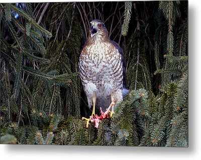 Metal Print featuring the photograph Mighty Raptor by Gene Walls