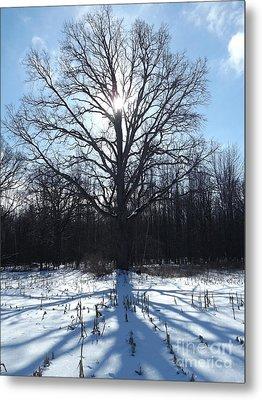 Mighty Winter Oak Tree Metal Print